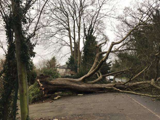 A tree fell down in Hempstead Road, Watford as a result of Storm Ciara.