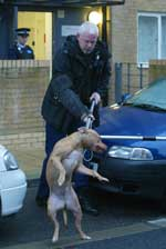 Enfield Independent: Dangerous Dogs