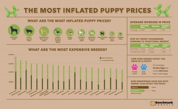 Enfield Independent: The most inflated puppy prices. (Benchmark Kennels)