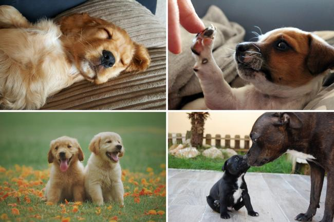 The dogs most vulnerable to theft in the UK - is your dog on the list? (Canva)