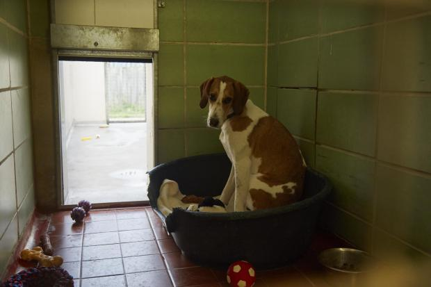 Enfield Independent: Bella is looking for a forever home
