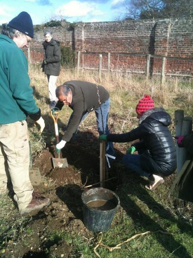 Volunteer Mark Mendez (centre) planting the first set of trees in Forty Hall Farm Orchard