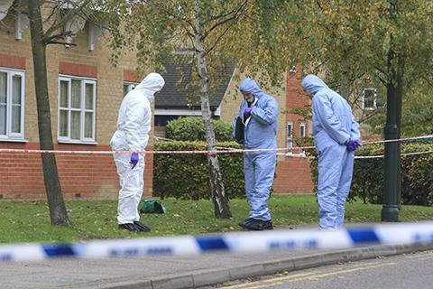 A team of forensics investigating Enfield Island Village on November 6
