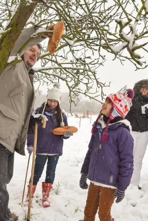 Young volunteers hanging bread on an apple tree during the wassail ceremony. Picture by Urvashi Roe