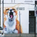Boe and Irony's fox in Turnpike Lane