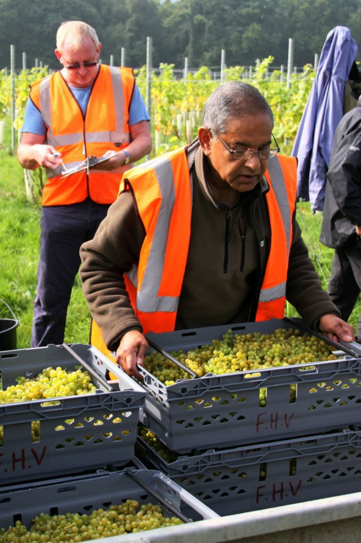 The Forty Hall vineyard describes itself as a community-led, horticultural enterprise